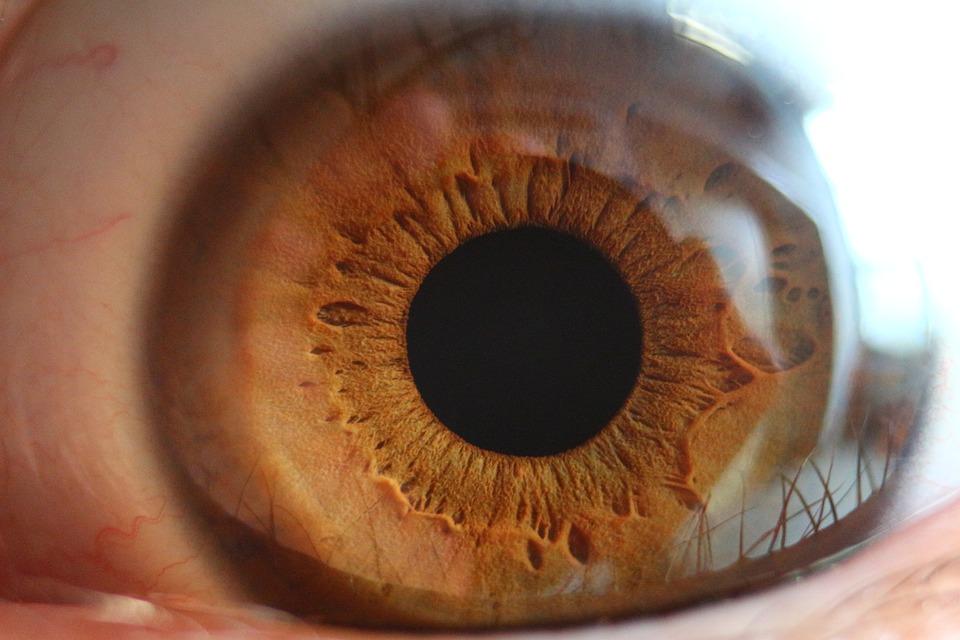 iris brun2